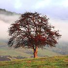 Morningtree by Asoka