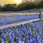 Texas Bluebonnets along a Woodrail Fence Panorama by RobGreebonPhoto
