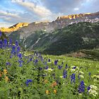 Colorado Wildflower Images - Yankee Boy Basin Summer 2 by RobGreebonPhoto