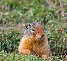 The Ground Squirrel by mspixvancouver