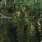 Green Reflections by Paraplu Photography
