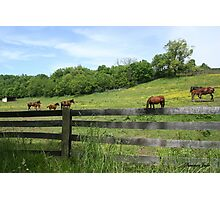 Springtime in a Peaceful Pasture Photographic Print