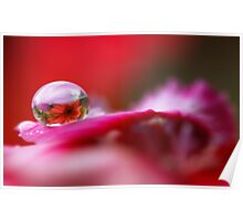 Daisy dew drop Poster