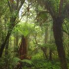 Rain Forest Fantasy - Mount Wilson, NSW Australia - The HDR Experience by Philip Johnson