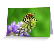 Bee Beetle on Lupinus Greeting Card
