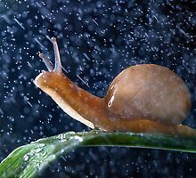 love the rain! by Oleg Serkiz