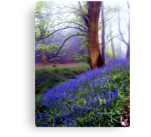 The Wonder of Nature Canvas Print