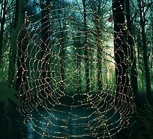 Spider web by Eva Nev