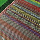 Tulip Table Cloth (Aerial view of tulip field) by TonyCrehan