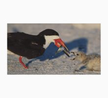 Black Skimmer 1 :Fish from mom to chick! T-Shirt