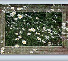 Daisies Gone Wild ~ in a Frame by SummerJade