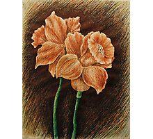 Orange Daffodils  Photographic Print