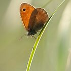 Orange Butterfly by JBlaminsky