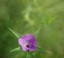 Single and violet by JBlaminsky