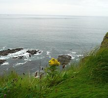 Dunluce Castle- Northern Ireland by Angela Nordheim