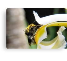 Abundance of pollen Canvas Print