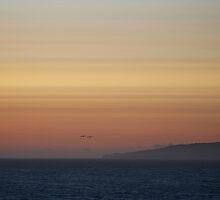 Pacific Coast by David Denny