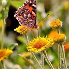 Summer Butterfly by NaturesEarth