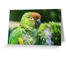 Nanday Parakeet Greeting Card
