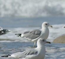 Two along the coast; Santa Barbara CA USA by leih2008