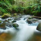 Toorongo River, Gippsland, Victoria, Australia by Michael Boniwell