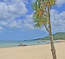 Beach at Tangalooma by Graeme  Hyde