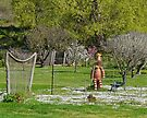 The Potman, Bushy Park, Tasmania, Australia by Margaret  Hyde