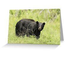 Black bear in a green field Greeting Card