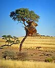 Sociable Weaverbird nests, Namibia by Margaret  Hyde