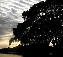 Silhouetted Pohutukawa Trees During Sunrise in Auckland by LastLittleBird