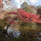 Riches of Autumn by nealbarnett