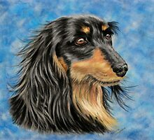 Marcus - Long Haired Black and Tan Dachshund  by Michelle Wrighton