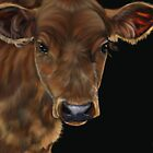 South West Calf by Michelle Wrighton