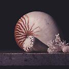 Nautilus Shell  by Rachel Slepekis
