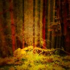 THE COLOURS IN THE WOODS by leonie7