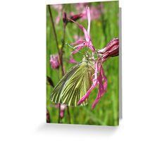 Down In The Meadow Greeting Card
