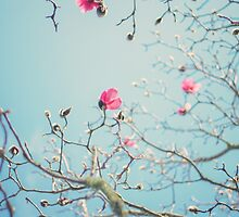 MAGNOLIA by Bloom by Sam Wales