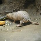 Hairless Mole Rat by AuntieBarbie