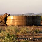 Elephant at the watertank by Margaret  Hyde