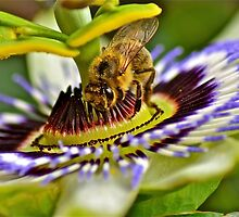 The Busy Bee by Alison Hill