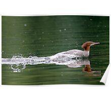 Smooooth Water Landing ! Poster