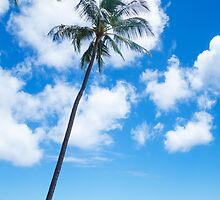 Palm trees by the ocean  by ellensmile