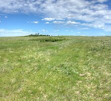 Prairie Breeze by Jim Sauchyn
