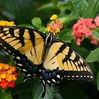 Loving the Lantana by autumnwind