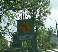 Caution ? Road sign...  by Angela Nordheim