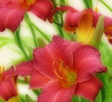 Day Lilies by kkphoto1