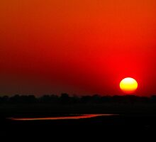 Chobe Red Sky by Jennifer Sumpton
