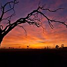 Old Tree Sunrise - Tongala Victoria Australia by Norman Repacholi
