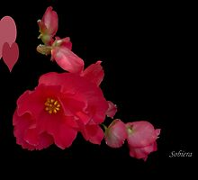 Begonia and her buddies... by Rosemary Sobiera