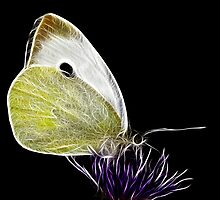 Butterfly by AWLPIX